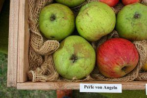 europom_13_perle_von_angeln